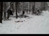 Лоси в лесу 2
